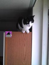 cat on cupboard