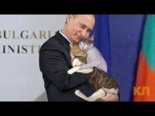 Vladimir Putin with cats