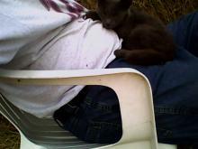 gray cat on a lap