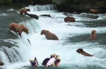 cat and kittens with bears fishing for salmon