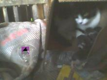 mother cat with kittens in box