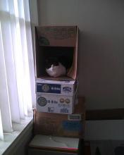 cat sitting in a box rather than on top of the tower