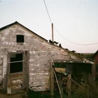 roofcatsandbutler-200.jpg