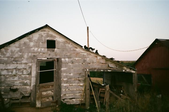 roofcatsandbutler.jpg